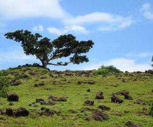 fig-tree-31