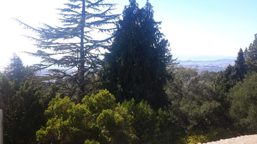 San Francisco through the trees